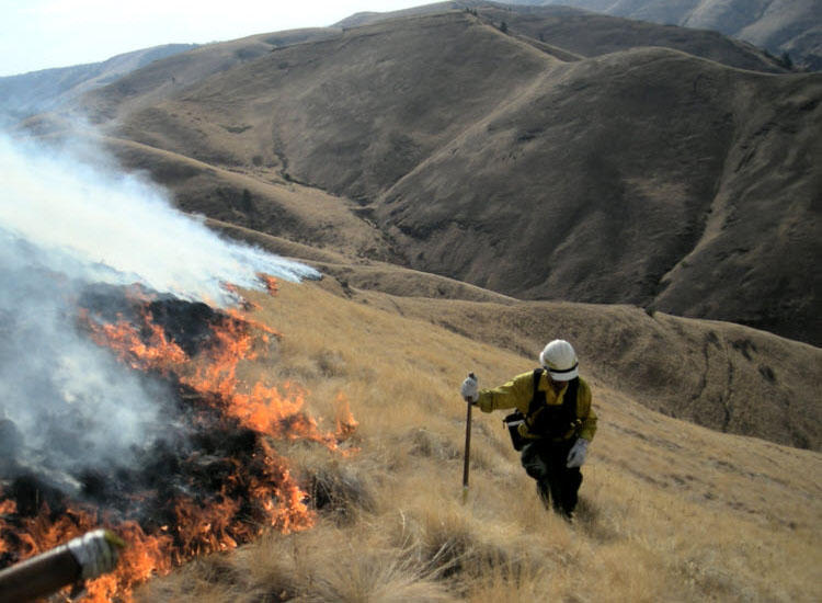File photo of a firefighter working near Wenatchee, Washington, during the 2016 fire season.