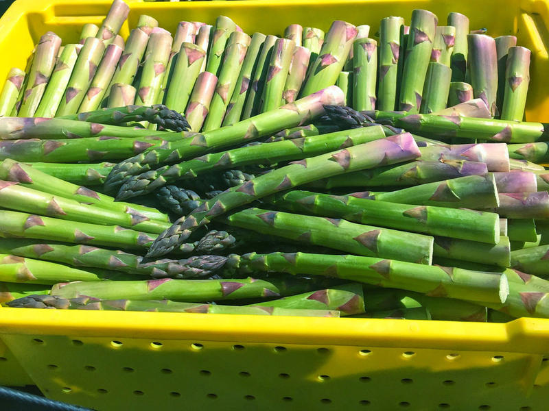 Farmers and packers say the asparagus has come on slow this year due to the cold, wet spring.