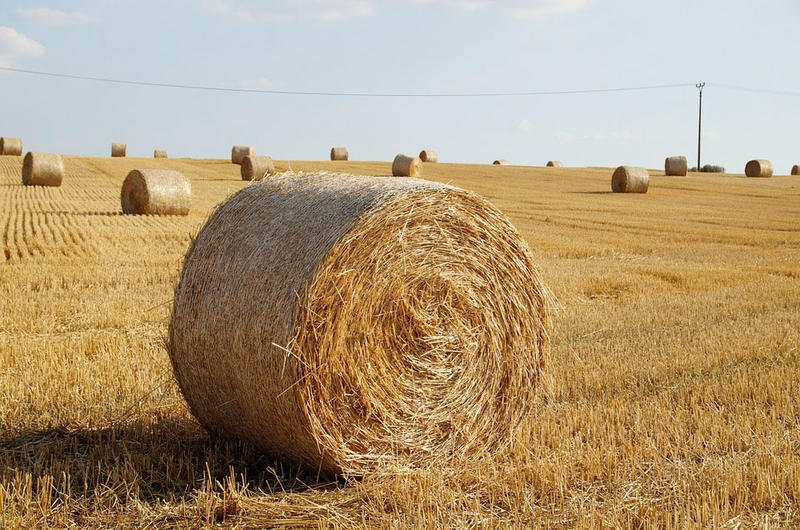 File photo. A company in eastern Washington is deveoping a process to convert waste straw into paper pulp.