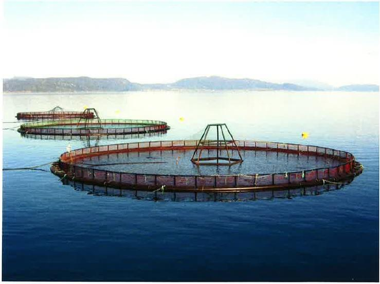 Example photo provided by Cooke Aquaculture division to Clallam County to show what salmon farming net pens near Port Angeles would look like.