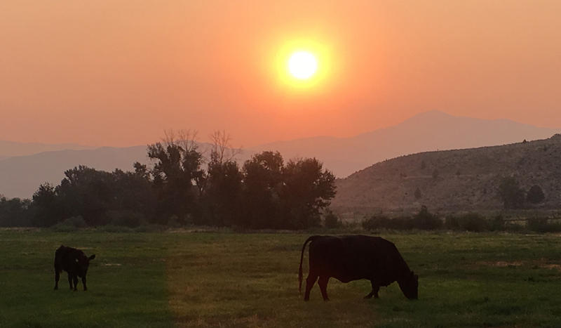 Raeann Van Arsdall says her mother angus cows don't know what's coming to Durkee, Oregon. Hundreds of eclipse visitors are starting to descend on their ranch.