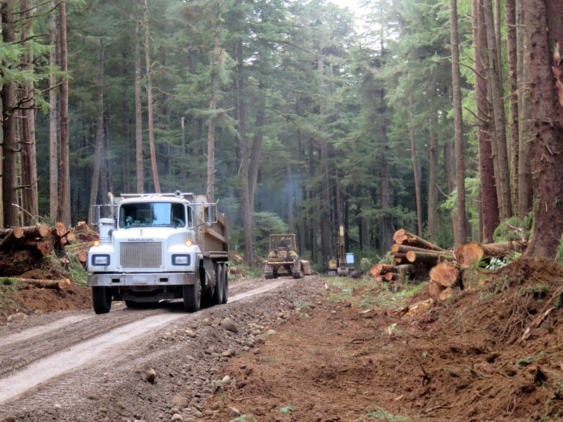 Land clearing and roadbuilding is underway on an elevated 26-acre parcel that will be home to the new Quileute Tribal School.