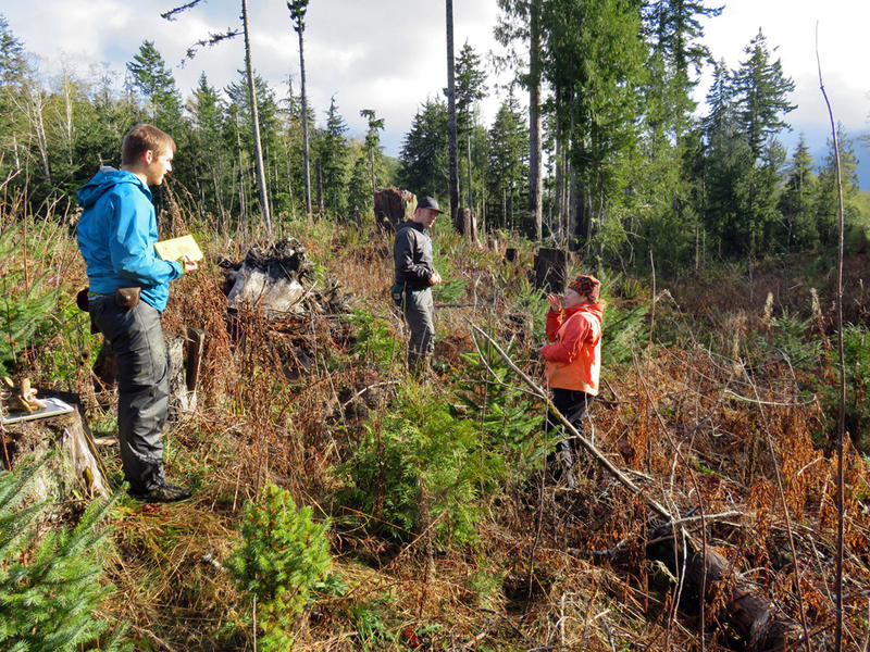 From left, Prof. Colin Amos, masters student Cody Duckworth and Prof. Liz Schermer, all of Western Washington University, investigate the Sadie Creek earthquake fault north of Lake Crescent.