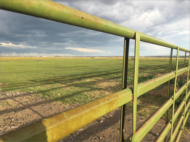 Keith and Katie Balzor's ranch just isn't as lush as it usually is this this time of year. They were only able to irrigate about 40 of their hundreds of acres. Storm clouds have passed through a lot, but they've gotten little rain on their pastures.