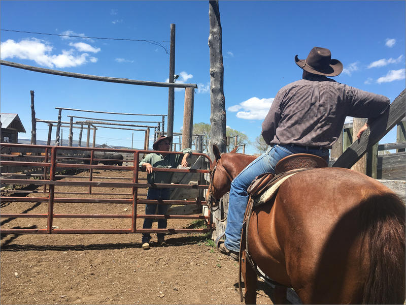 Casey Shelman is a cowboy and manager of the Bel-A Ranch. He's a bit worried the drought might hurt, but he says that come next year, ''We'll still be here.''