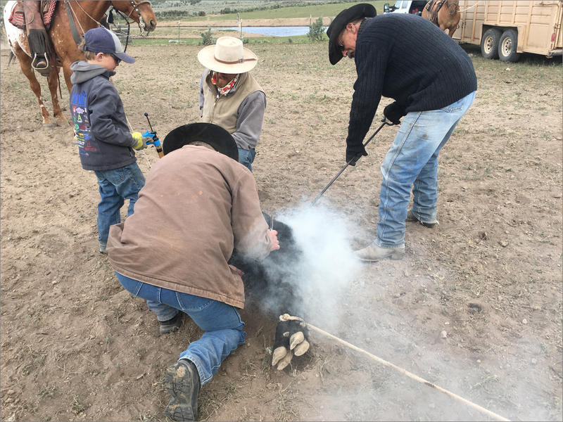 At brandings in southeast Oregon, kids start learning ranching work young. Often they are put in charge of holding horses, vaccinating cattle and keeping the brands in the fire hot with fresh wood.