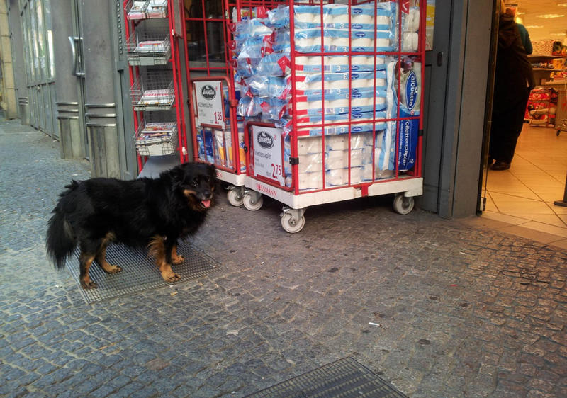 A photograph of a dog waiting for its owner, submitted to the Dogs Waiting In Berlin blog.