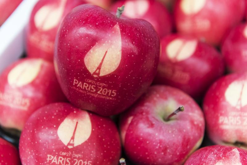 Apples marked with the logo of the COP21 Climate Conference 2015 held in Paris, France.