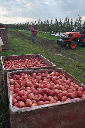 Last year, the Washington Farm Labor Association brought more than 4,000 seasonal workers here to fill a labor shortage.