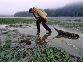 In recent years, millions of larval oysters in Northwest hatcheries have died.