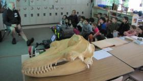 Jeff Hogan, executive director of Killer Whale Tales, shows an orca skull to students.