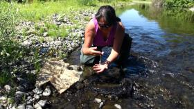 Eva Carl with a dead Pacific Lamprey eel, which has been attracting the attention macro-invertebrates to Northwest Streams. These macro-invertebrates are essential to algae growth in the stream, which will help keep the creeks healthy.