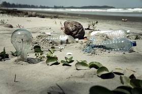The plastic in the ocean acted sort of like a poison pill for fish, sopping up those pollutants.