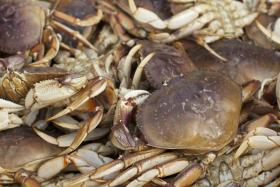 Oregon's Dungeness crab season has been delayed until December 16th.
