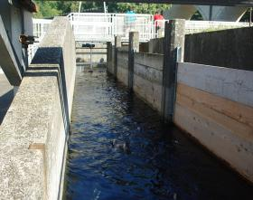 Fish and Wildlife departments in Oregon, Washington and Idaho release millions of hatchery-raised salmon and steelhead into the rivers of the Northwest every year.