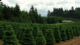 A once-stalled plan to support Christmas tree growers nationwide looks to go forward as part of Congress' new Farm Bill.