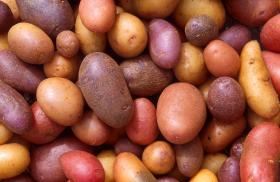 Northwest potato growers say they've been snubbed in a federal nutrition program.