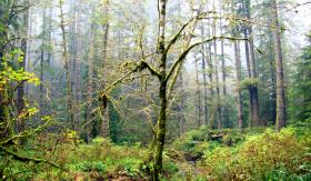 Conservation groups object to the potential privatization of the Elliott State Forest in Oregon's coast range.