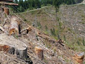 Seneca Jones Timber Company acknowledges that clearcuts would take place if they receive the property.