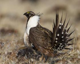 One county in Southeastern Oregon has announced one of the largest land conservation agreements in the state to protect greater sage grouse.