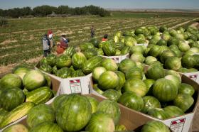 This summer's hot, dry weather has been a mixed blessing for Northwest farmers.