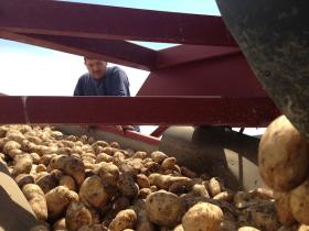 Around 20 percent of the United States' potatoes come from the Columbia Basin.