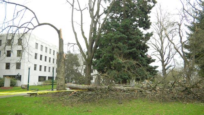 High winds brought down this tree on the grounds of Oregon capitol Monday.