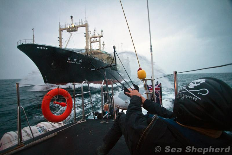 A Sea Shepherd crew tangles with a Japanese whaling ship in Antarctic waters in 2011.