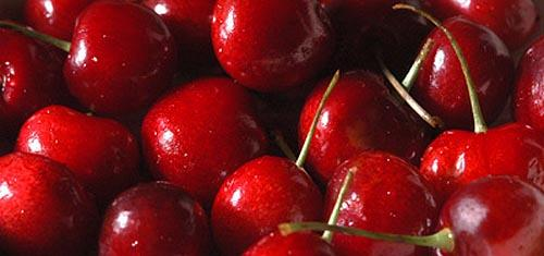 Cool weather and rain could delay ripening and compress the cherry growing season.