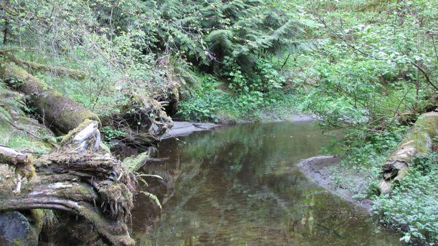 Barker Creek on the Kitsap Peninsula.