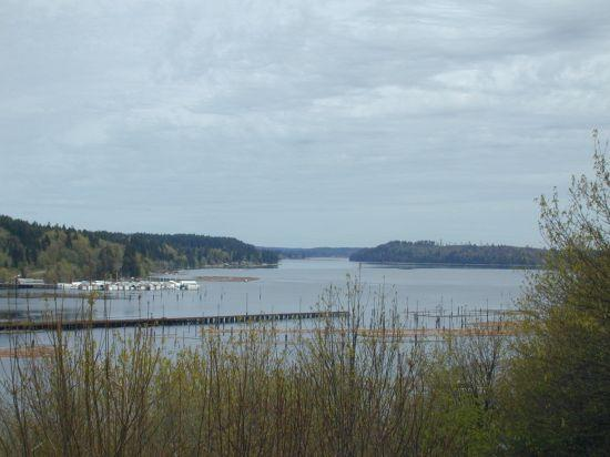 Three Puget Sound bays were closed to shellfish harvest because of unsafe toxin levels.