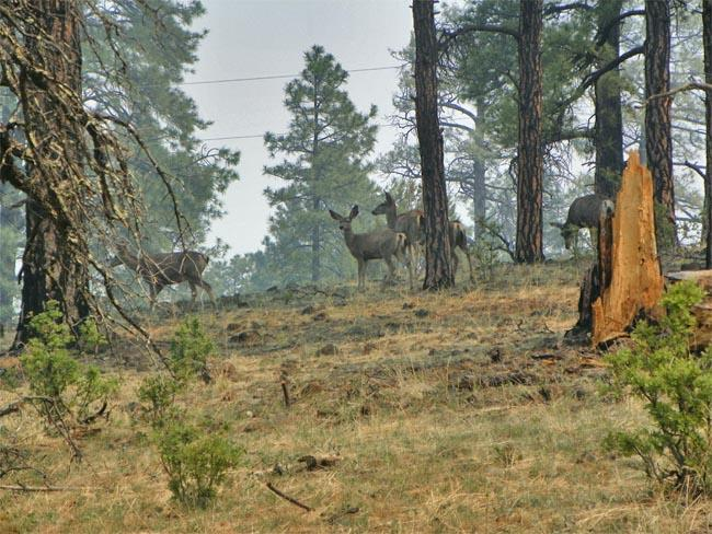 Wildfires have closed some prime hunting grounds in the Northwest.