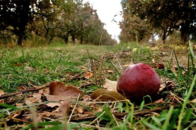 Washington apple growers have been having a hard time finding workers to pick their fruit.