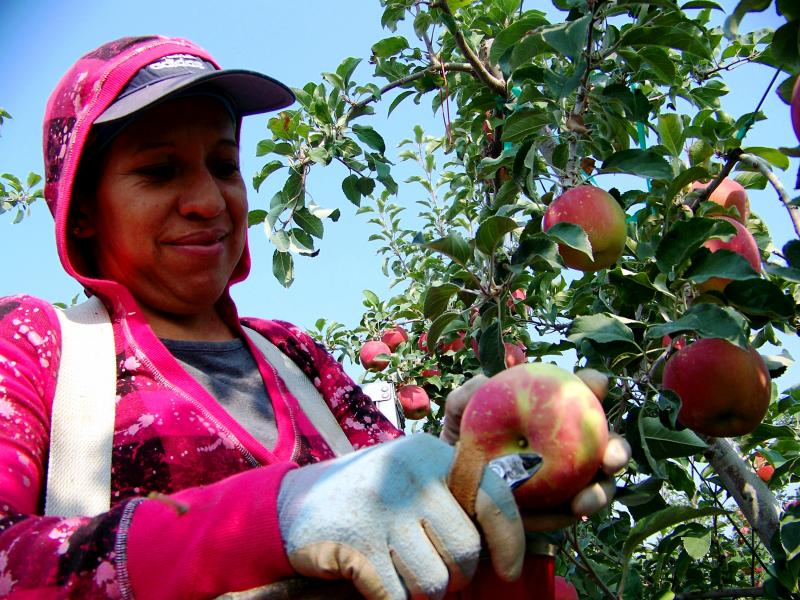 Photo of apple picker.