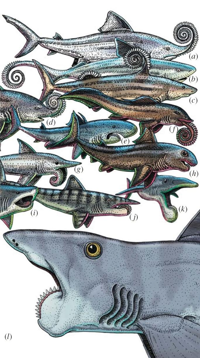 Reconstructions of Helicoprion since 1899, by Ray Troll.