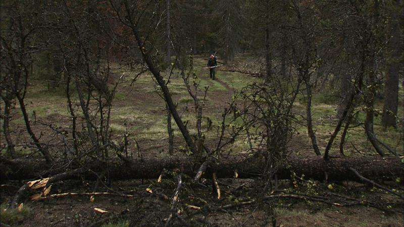 Volunteers help clean up trees that have blocked some trails in the Frank Church Wilderness.
