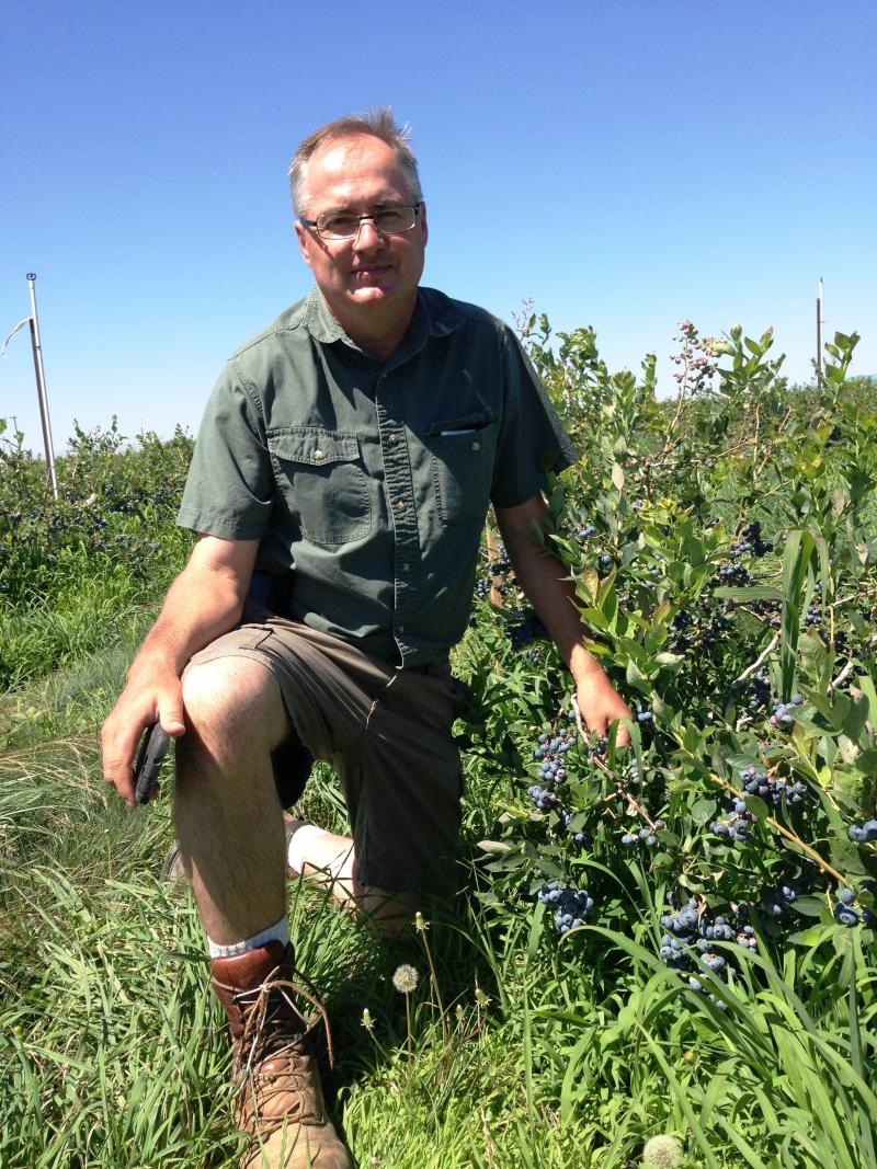 Alan Schreiber heads Washington's Blueberry Commission.