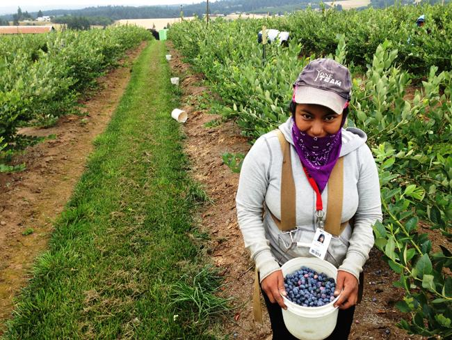 Erika Nicolas Garcia, 18, of Beaverton, Ore., has nearly filled her pail at a blueberry farm near Hillsboro, Ore.