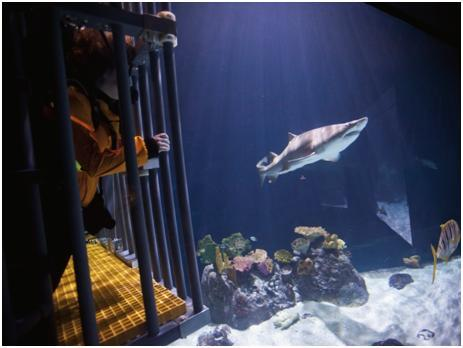 Beginning Friday an aquarium in Tacoma will let paying visitors dive in a shark-infested tank.