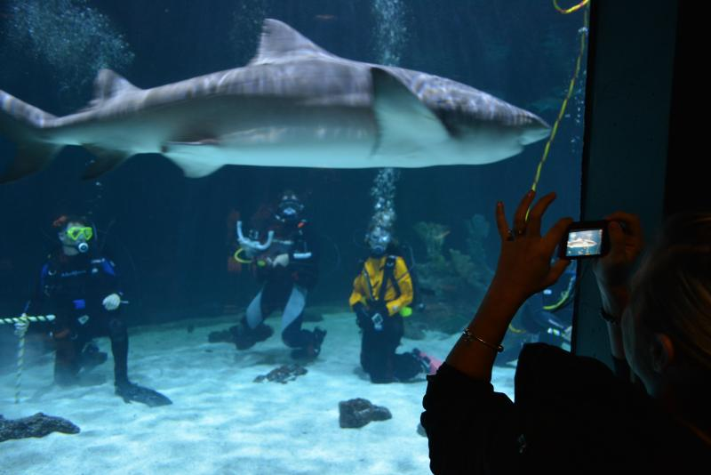 The spacious saltwater tank holds seventeen sharks of six different species.