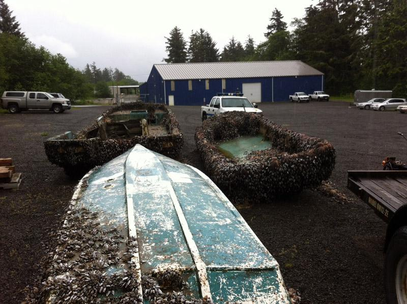 Three Japanese-style skiffs washed ashore over the Memorial Day weekend and were moved to this state parks maintenance yard near Ilwaco, Wash.