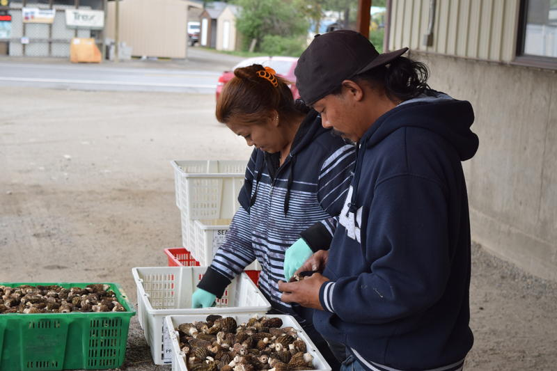 The Husband-and-Wife team of B Oeun and Mollie Yen set up their buying station in different spots throughout the northwest all year long.
