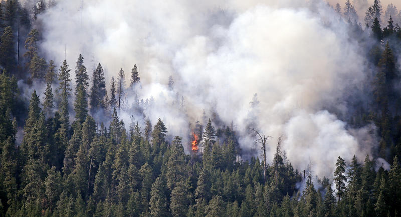 Smoke rises from a thickly timbered hillside as a tree goes up in flames in the hills above Twisp, Wash., Friday, Aug. 21, 2015.