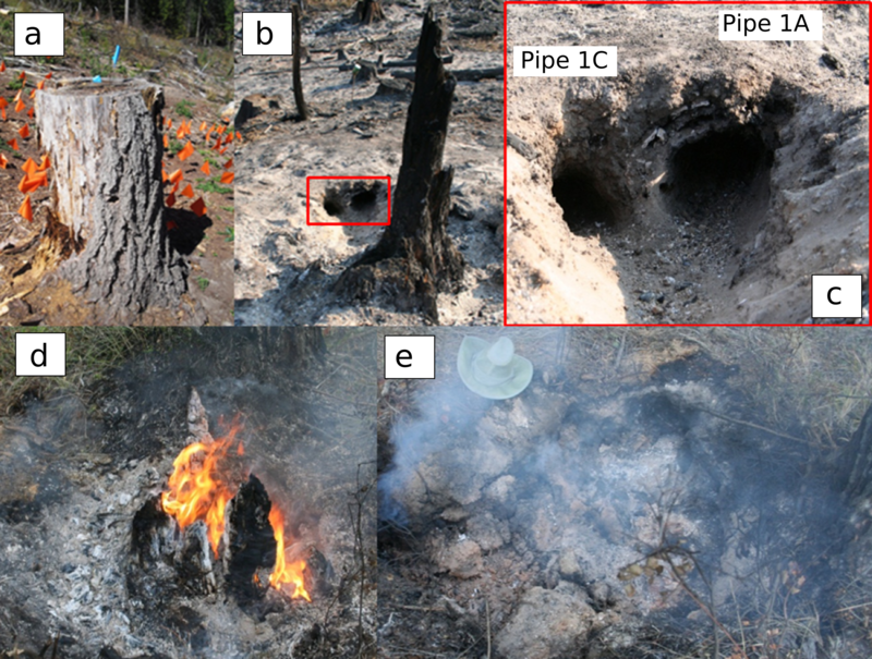 Root materials that have been decaying in forest soils for some decades may combust during forest fires and either create what we call soil pipes--large open networks in the soil--or at least connect such networks to the soil surface.