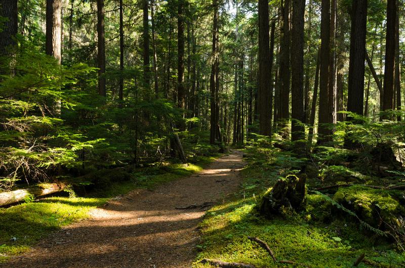 McDonald Creek Forest Trail, Glacier National Park