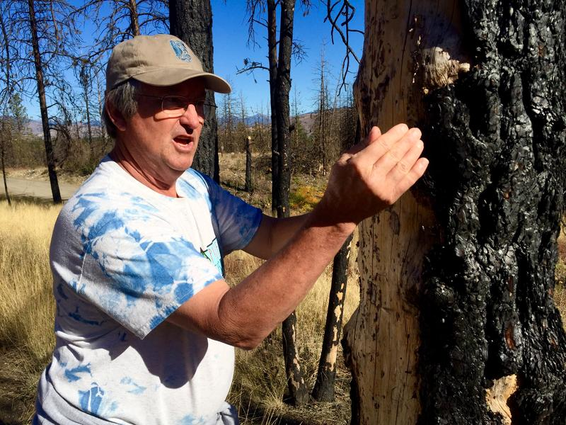 The Carlton Complex burned through Ken Bevis' property in 2014. Since then, he hasn't cut down the dead trees — they make great bird habitat.