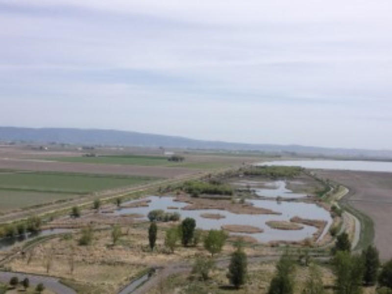 Wildlife refuges in the Klamath Basin often feature a mixture of commercial agriculture and what remains of the historic wetlands.