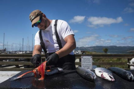 The Port of Astoria is closing fish cleaning stations due to environmental concerns.