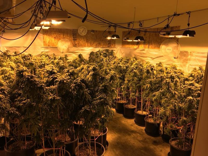 A small portion of the illicit marijuana found during a three-county bust on Tuesday.