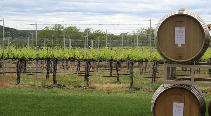 Wine barrels near the Walla Walla Vintners winery